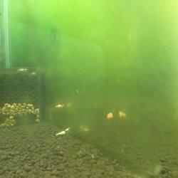 画像2: バクテリアエレメント